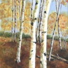 AutumnBirches