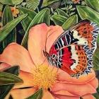 ButterflyBuffet