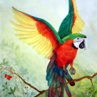 Macaw1Harlequin
