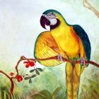 Macaw2BlueandGold
