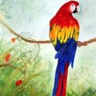 Macaw3Scarlet