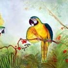 MacawTriptych