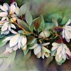 MagnoliaSpray