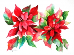 Pointsettia Spray